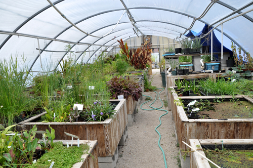 DWGGreenhouseJuly2015